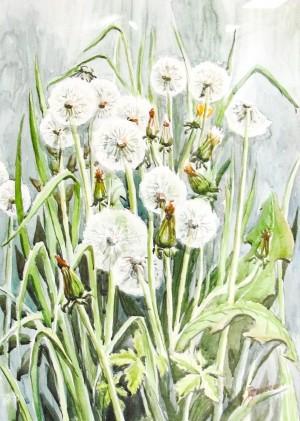 D. Dobosh-Broda 'Dandelions'