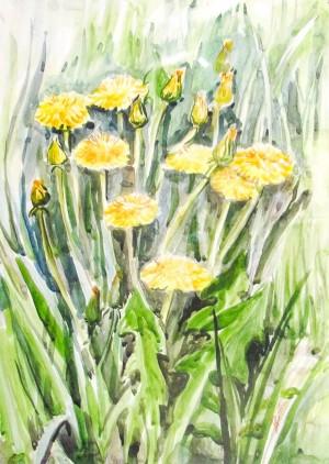 D. Dobosh-Broda 'Dandelion Blossom'