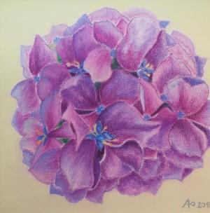 L. Pavlyshyn 'Hydrangea'