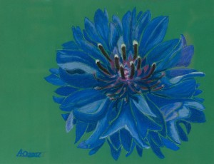 'Independent, Volitional And At The Same Time Gentle And Playful – Heavenly Cornflower Nataliia', 2017, pastel on paper