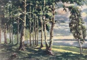 The edge of forest. Senezh Lake