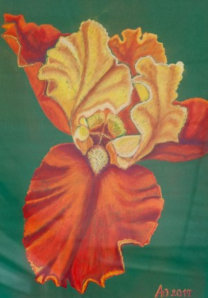 'Open, Light, Sensitive, And Fluttering With Bright Imagination – A Red Iris Oksana', 2017, pastel on paper