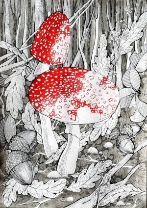 Fly Agaric', 2014, paper, ink, pen, watercolour, 42x30