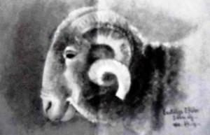 Голова барана, 1911 (Приватна колекція)