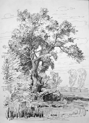 Старий дуб, 2005, пап. лінер, 42х30