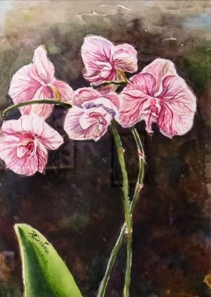 Добош-Брода Д. 'Квітка орхідеї'