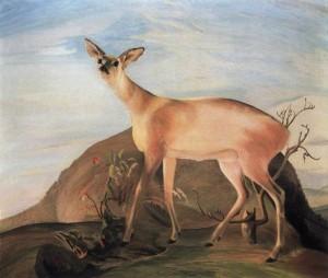 Олень, 1893
