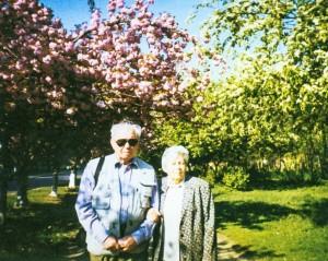 Cherry blossom, 2003