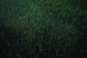 Grass, 2014, digital printing, dibond