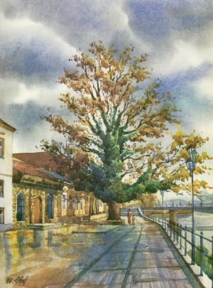 Symbiosis of a huge ash tree with evergreen ivy 1996 watercolour